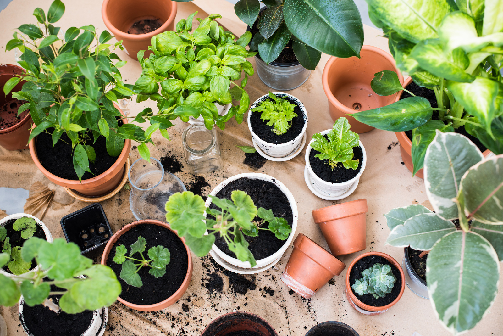 keep houseplants healthy